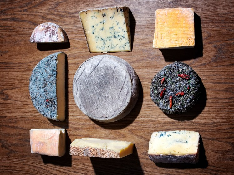 WHAT GENE-SWAPPING CHEESE MICROBES COULD SAY ABOUT ANTIBIOTIC RESISTANCE