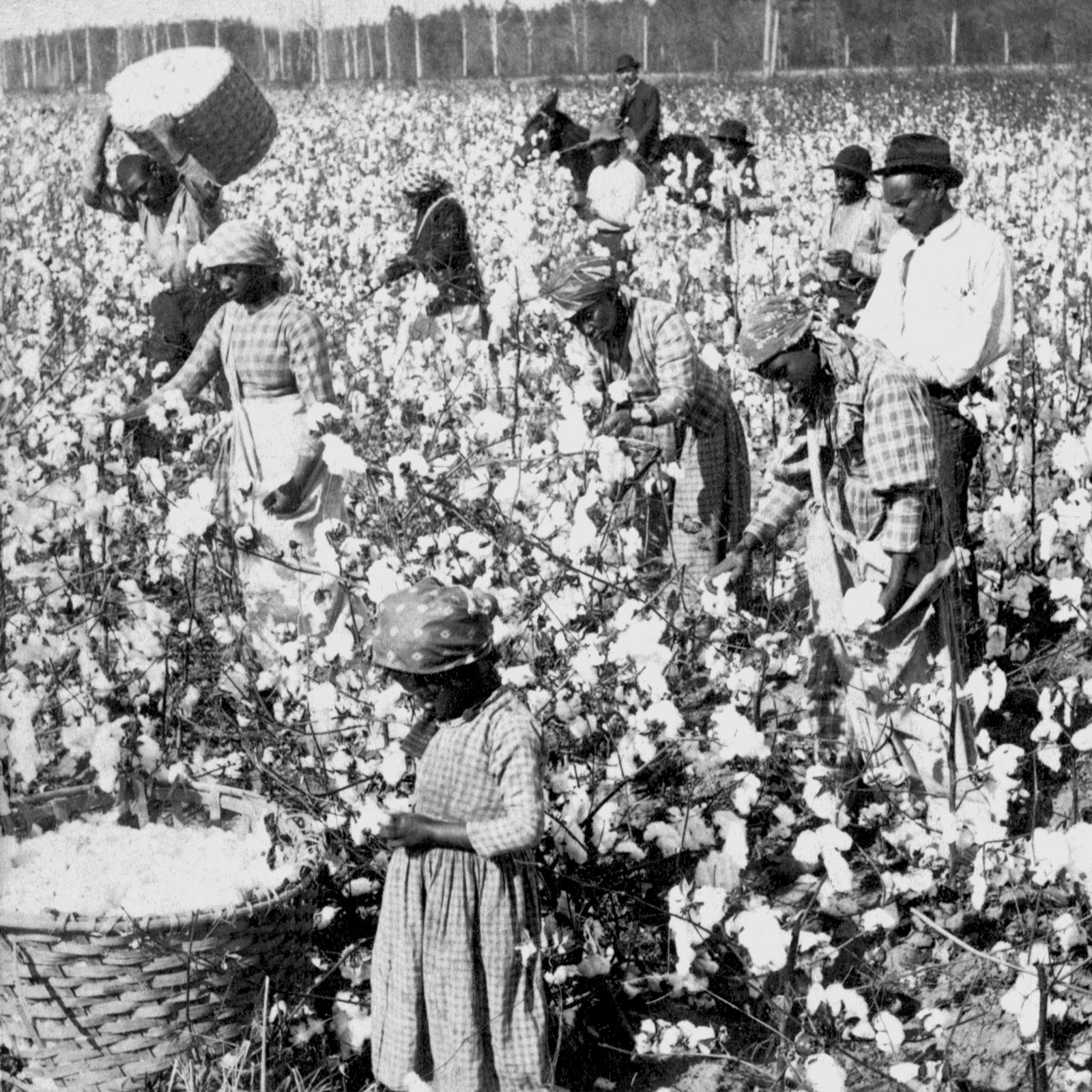 Slavery is NOT Capitalism and Here's Why
