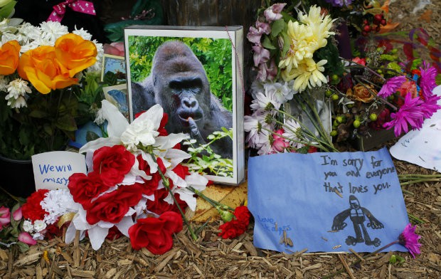 Cincinnati Zoo deletes Twitter account after one Harambe reply too many